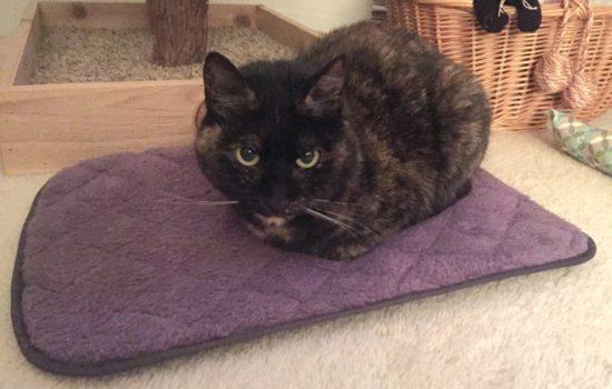 comfy-cat-napper-purple