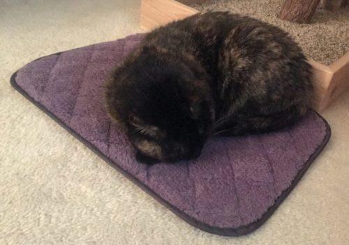 comfy-cat-napper