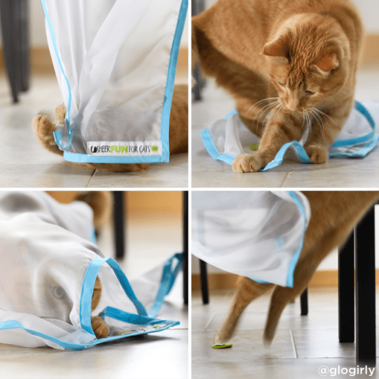 sheer-fun-for-cats