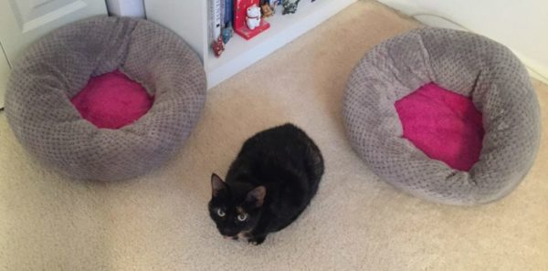 jackson-galaxy-donut-bed