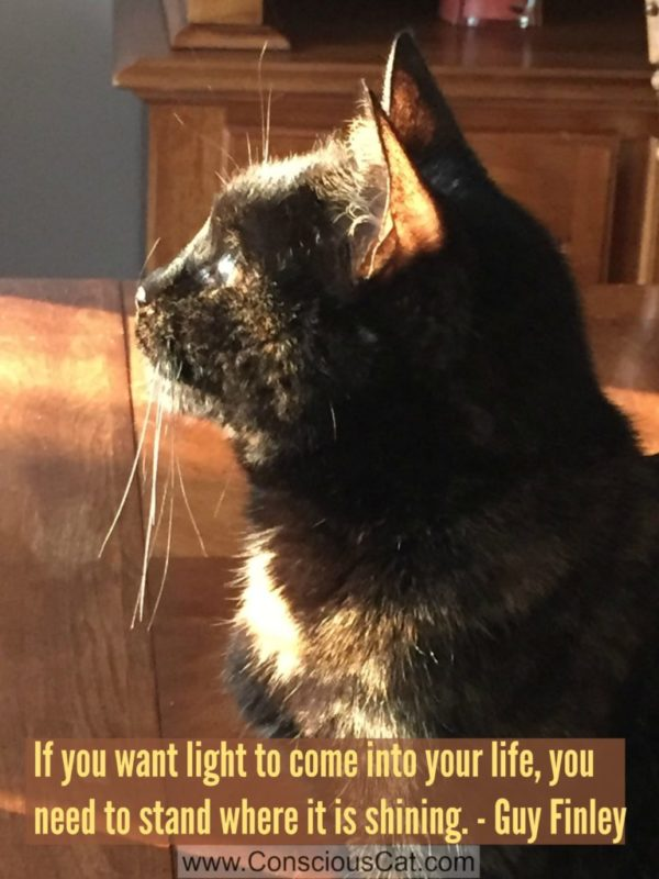 tortoiseshell-cat-sunlight