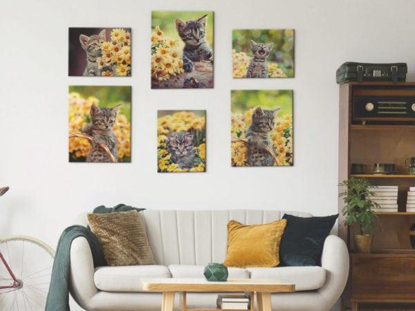 canvas-cat-photo-prints