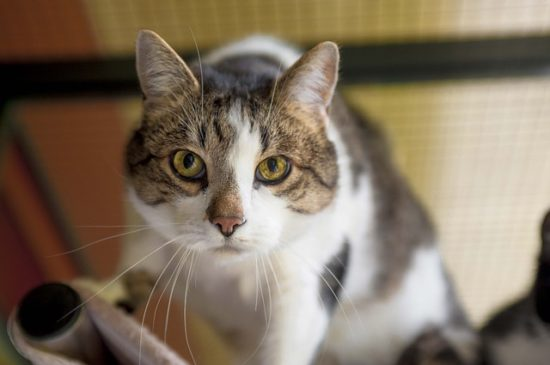 cat-household-hazards