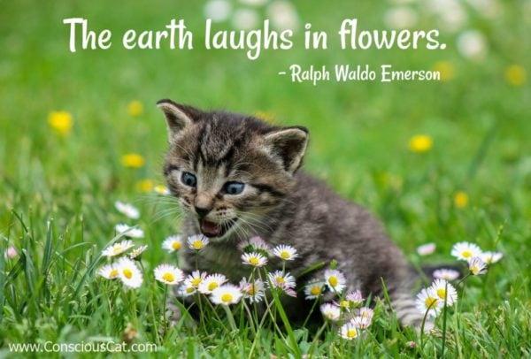 kitten-meadow-flowers