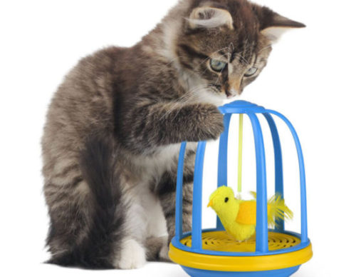 Bird-in-a-Cage-Cat