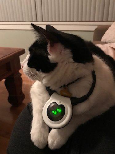 assisi-loop-stomatis-cat