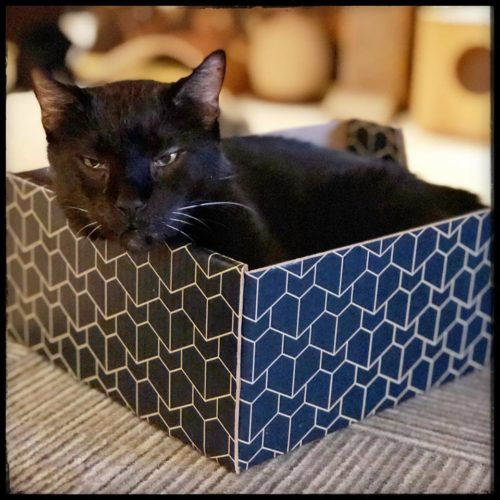 black-cat-box