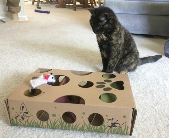 cat-amazing-puzzle-toy