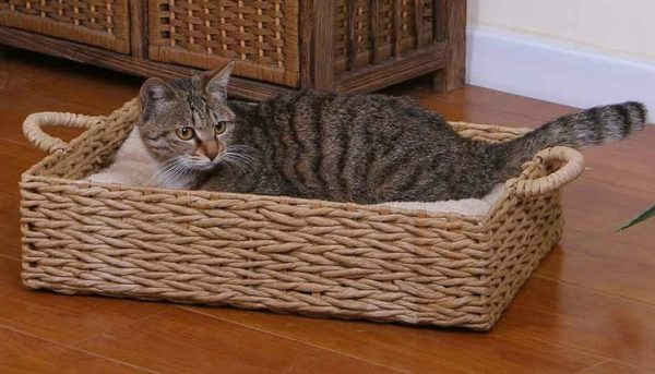 basket-cat-bed