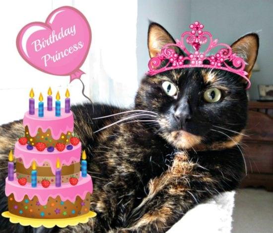 allegra-cat-birthday