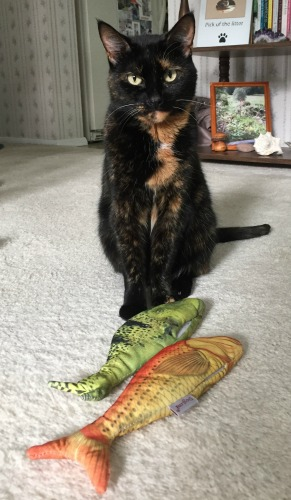 fish-cat-toy