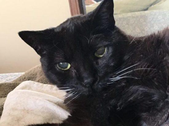 black-cat-bed