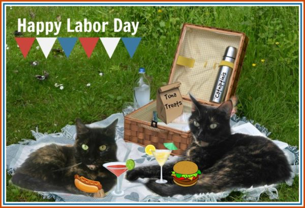 labor-day-picnic-cats