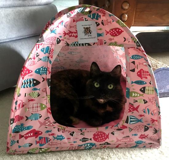 cat-fish-tent