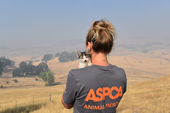 aspca-animal-rescue-california-wildfires