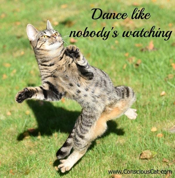 dance-cat