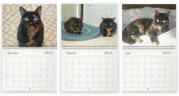2019-Conscious-Cat-calendar