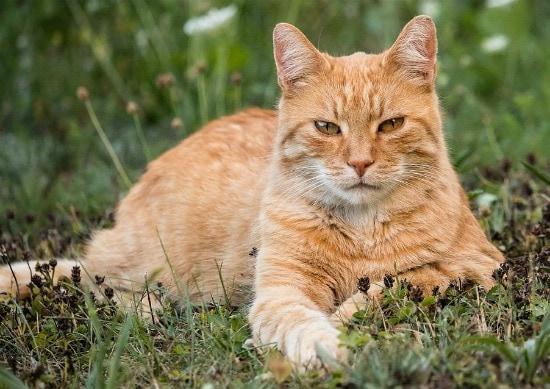 feline-behavior-origins