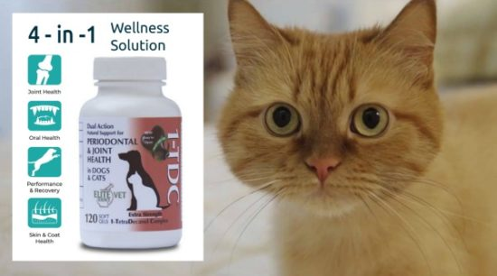 1tdc-wellness-solution-cat