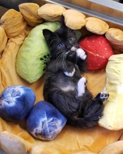 Francis-kitten-bed