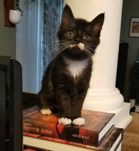 Francis-kitten