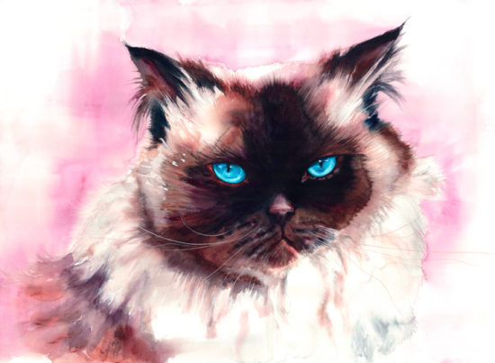 custom-cat-portrait