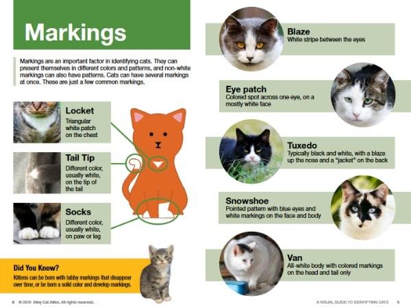 cat-markings