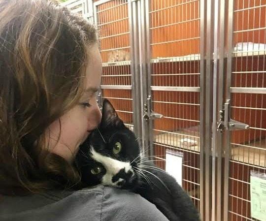 shelter-cat-hugging