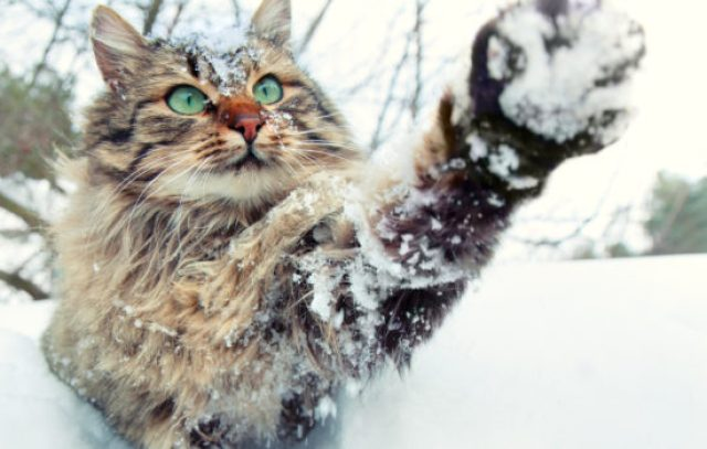 cat-winter