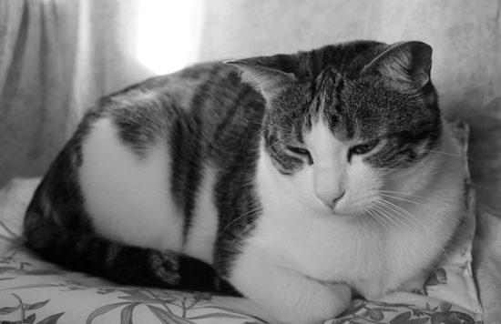 grieving-cat