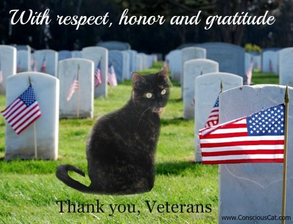 veterans-day-cat