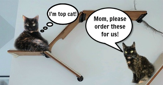 cat-shelves