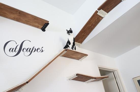 cat-climbing-shelves