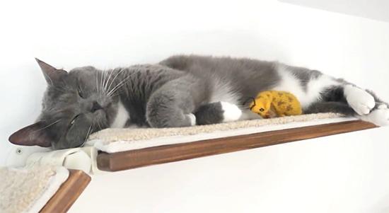 padded-cat-shelves