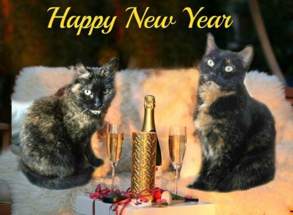 happy-new-year-cats