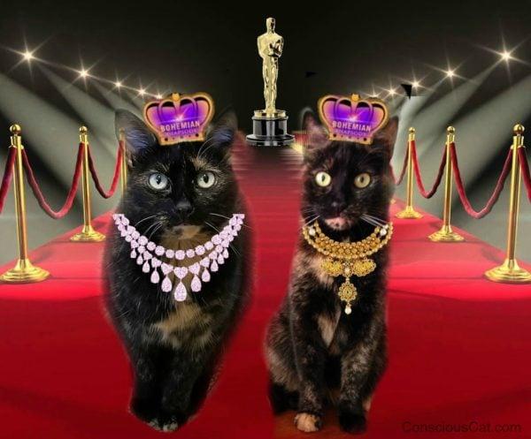 bohemian-rhapsody-oscar-cats