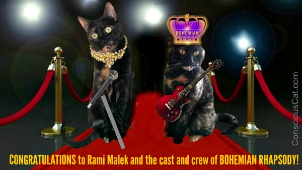 Bohemian-Rhapsody-cats