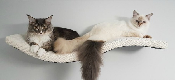 padded-cat-shelf-double
