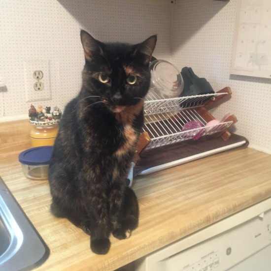 cat-in-kitchen