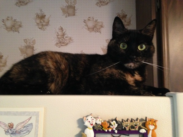 cat-on-fridge