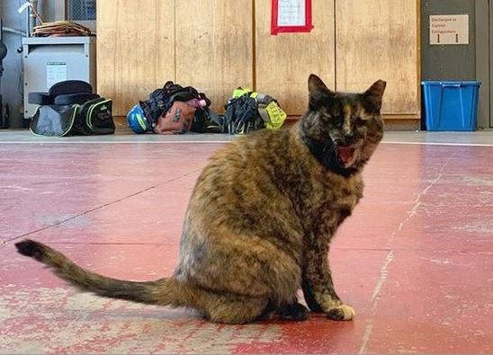 edna-fire-cat
