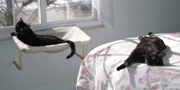 cats-in-sunny-room