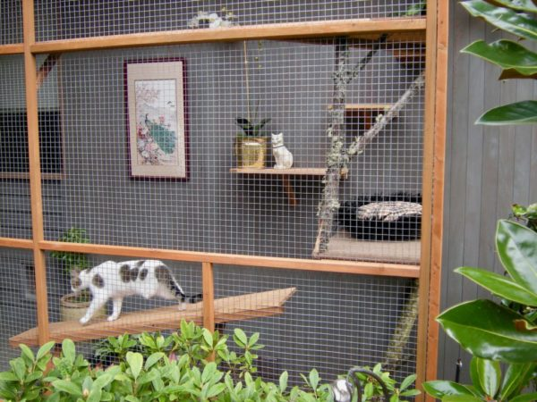 catio-cat-enclosure-tripawd-cat-walking-shelf-catiospaces