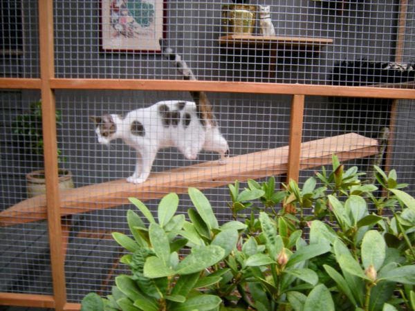 catio-cat-enclosure-tripawd-special-needs-catiospaces