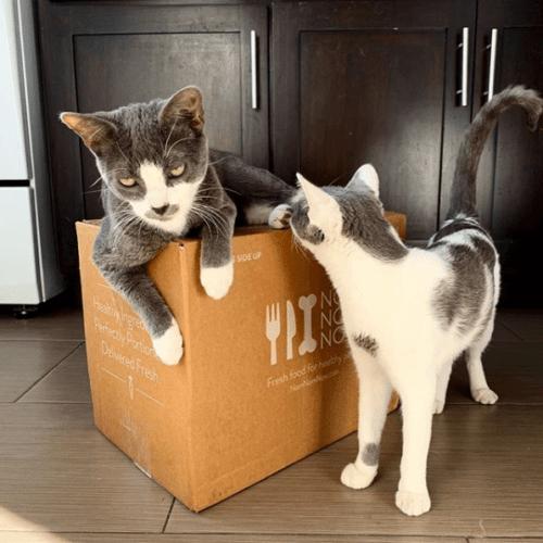 NomNomNow-cats