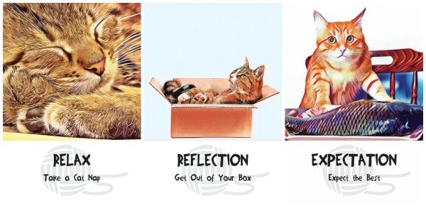 cosmic-cat-wisdom cards