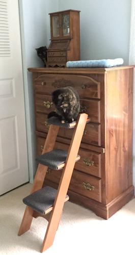 cat-ladder-bedroom