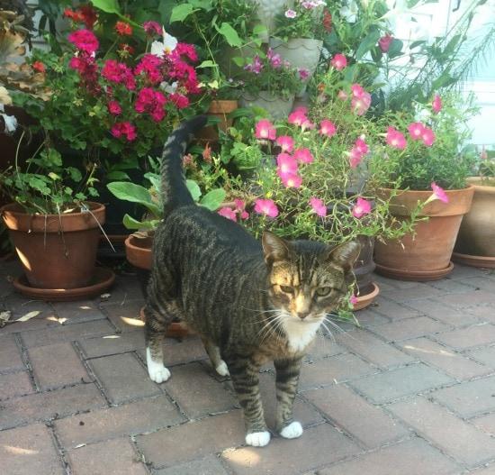 cat-flowers-terrace