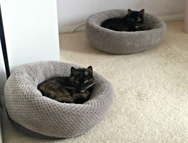 donut-cat-beds