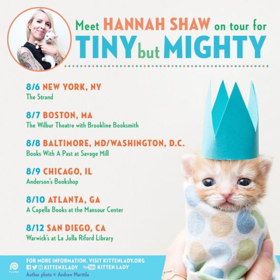 kitten-lady-tour